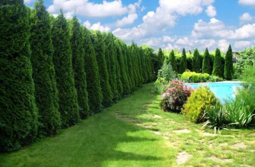 Посадка деревьев и устройство газонов